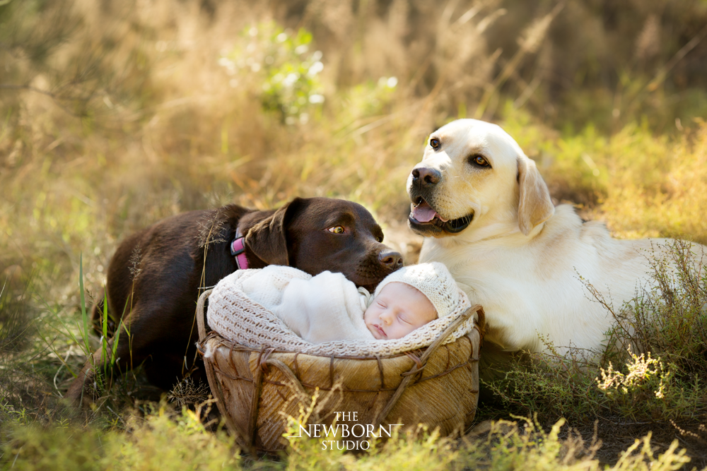 outdoor newborn baby photos with dog